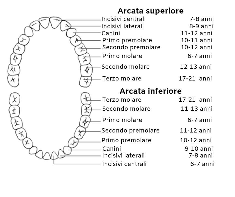 Calendario Dentini.La Dentizione Dei Bambini Odontosicura
